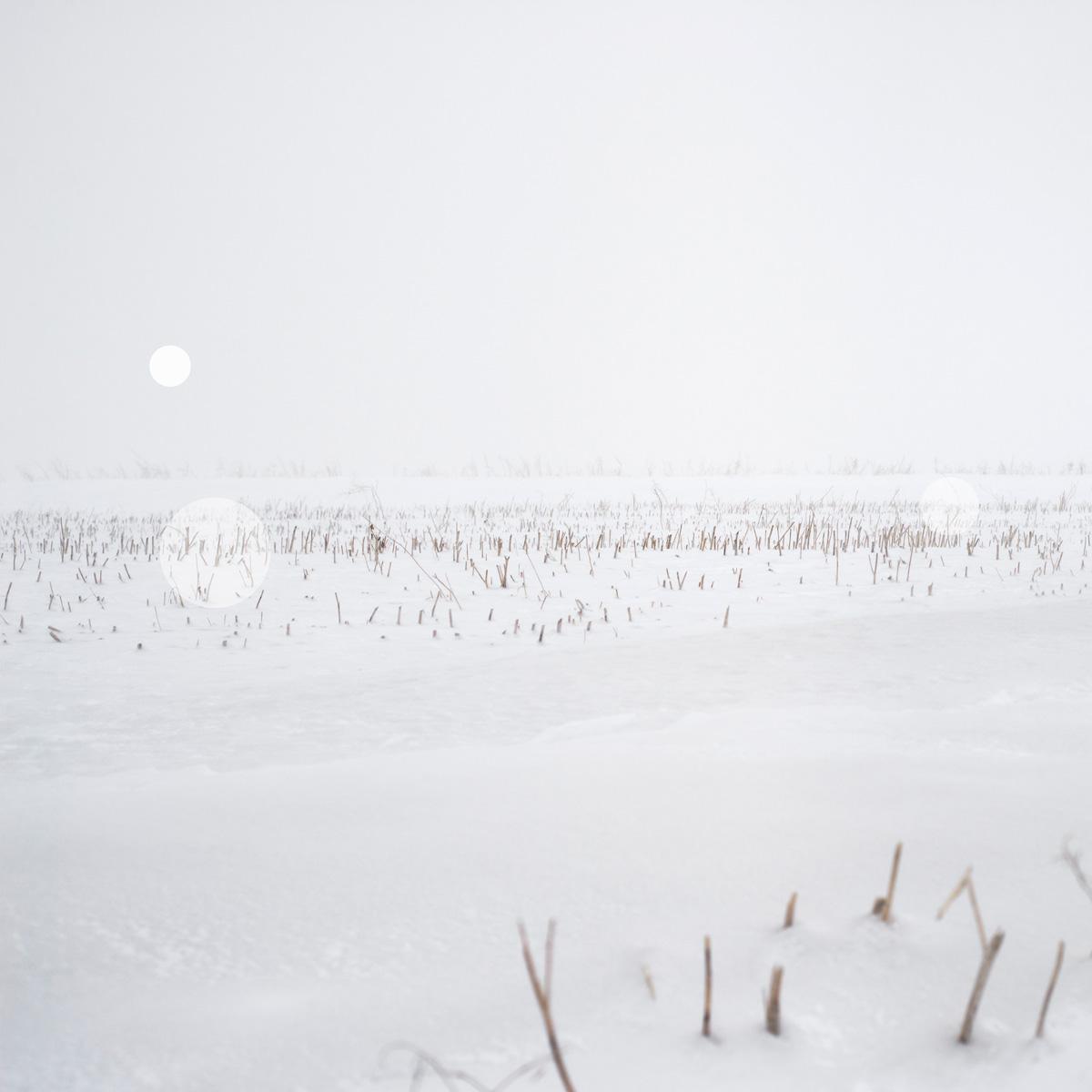 Artereal_Gallery_2014_Rebecca_Beardmore_Snow_Grasslands_2