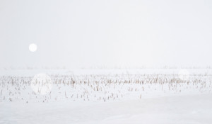 Snow Grasslands Series (II) – Alberta near Trochu_2014_ uv flatbed and screen print on silvered and sandblasted laminated glass_edition of 5 + 1 AP