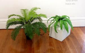 nervouse plants sized